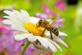 Bei Heuschnupfen: Finger weg von Nahrungsergänzungsmitteln mit Bienenpollen
