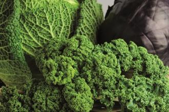 Gemüse unterstützt das Entgiften