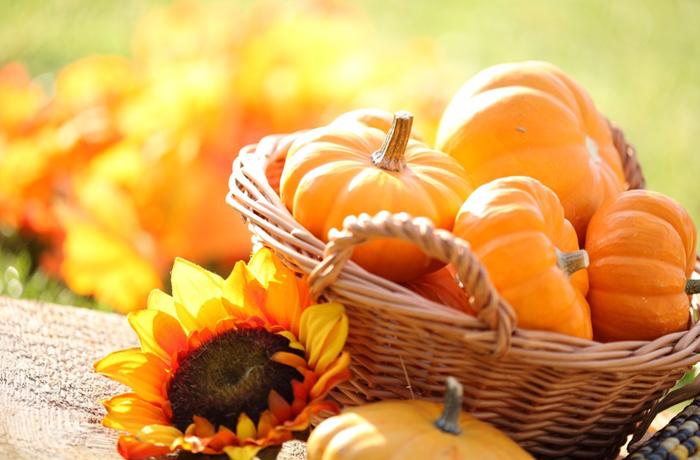 Vitamine und Nährwerte machen den Kürbis zu einer gesunden Mahlzeit. Seine Inhaltsstoffe stärken Sehkraft, die Haut und schützen vor Bluthochdruck und Schlaganfall. | Foto: Magdalena Kucova - fotolia