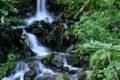 Wandern im südlichen Schwarzwald bietet herrliche Naturerlebnisse.