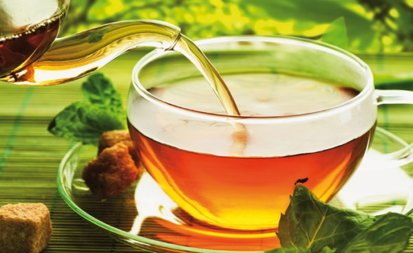 Grüner Tee ist beliebt und gesund: Da die Teeblätter nicht fermentiert werden, bleiben nahezu alle im frischen Blatt enthaltenen Wirkstoffe erhalten