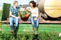 Gemüse aus heimischen Anbau