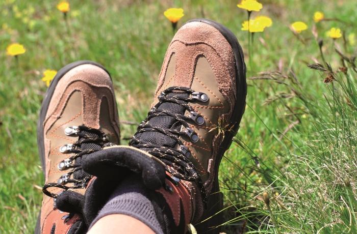 In Wiesen mit hohem Gras und an Waldrändern lauern Zecken. Einem Zeckenbiss lässt sich jedoch vorbeugen beziehungsweise mit Ruhe entgegnen