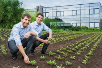 Heilpflanzen für homöopathische Komplexmittel aus eigenem Anbau: Mathias (l.) und Marcus Hevert (r.) sind stolz auf die frische Solidago-Anpflanzung am Firmenhauptsitz in Nussbaum.