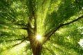 Der Klimawandel hat zahlreiche Folgen: Hitzewellen, intensive Niederschläge, Überschwemmungen. Auch die Pflanzenwelt kämpft mit den Auswirkungen des Treibhauseffektes