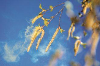 Wer will, kann sich Pollenvorhersagen auf sein Smartphone laden. Bis zu fünf Tage im Voraus wird in einer Pollen-App angezeigt, welche Allergene gerade auftreten