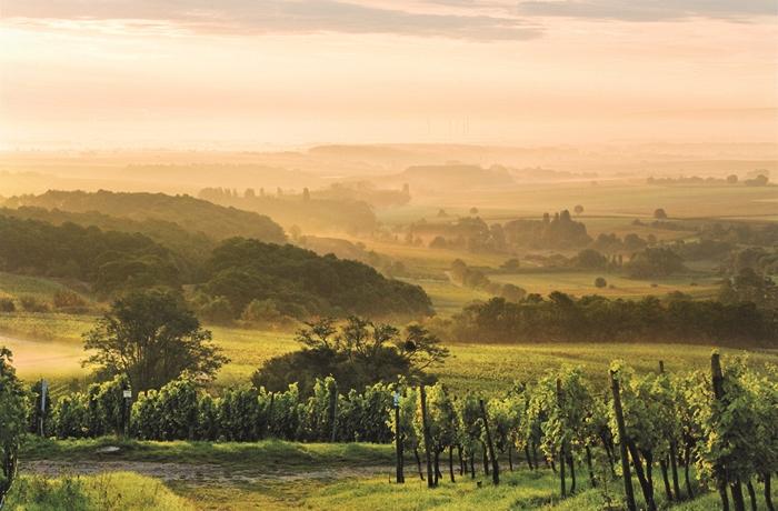 In der Pfalz befindet sich das zweitgrößte Weinbaugebiet Deutschlands.