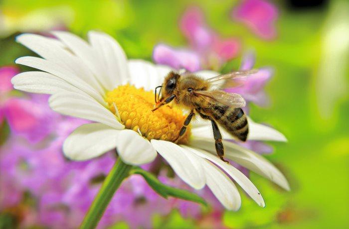 Was ist bei einem Insektenstich zu tun? Erste Hilfe egal ob bei einem Wespenstich, Mückenstich oder Bienenstich bietet Kühlung.