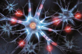 Vitamin B12 spielt für die Nervenfunktionen eine besondere Rolle. Was das Vitamin noch kann und wie man Vitamin-B12-Mangel ausgleicht.