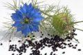 Schwarzkümmel und Kümmel schmecken nicht nur vielen Menschen. In Studien mit Tieren dämmten die Gewürze das Wachstum von Tumoren ein.