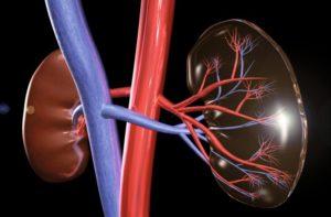 Leber und Nieren leisten als körpereigenes Entgiftungssystem jeden Tag Erstaunliches.