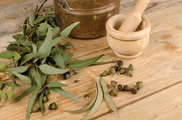 Ein möglicher Weg aus der Antibiotikakrise: Heilpflanzen wie Eukalyptus und Cranberrys wirken wie natürliche Antibiotika.