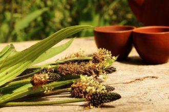Michael Straub im Interview auf homöopathie-entdecken.de den Anbau von Heilpflanzen und wie sie in der Homöopathie genutzt werden.