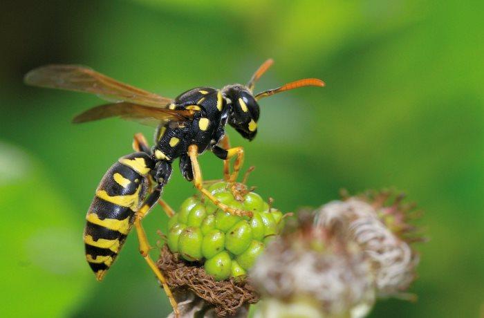 Die Folgen von Insektenstichen, wie etwa Schwellungen und Juckreiz, lassen sich oft homöopathisch behandeln.