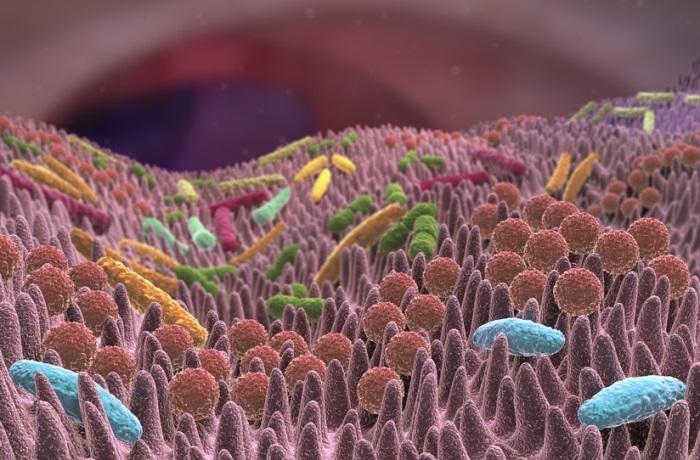 Unsere Darmflora beeinflusst auch den Rest unseres Körpers – zum Beispiel die Haut.