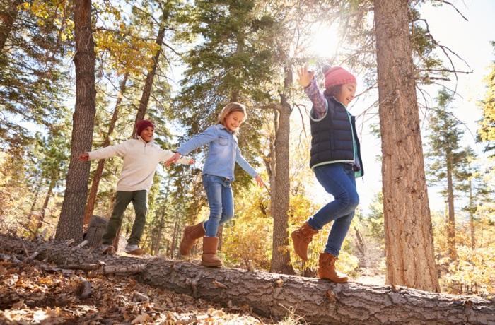Im Wald lauert mitunter Borreliose-Gefahr durch Zeckenbisse.