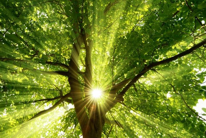 Laut einer Studie können schon fünf Minuten in der Natur für die Erholung der geistigen Kräfte sorgen.