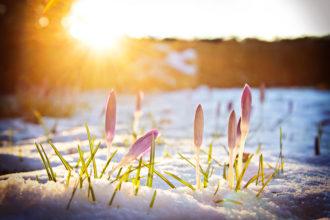 Es besteht kein Zweifel mehr: Der Frühling ist zurück
